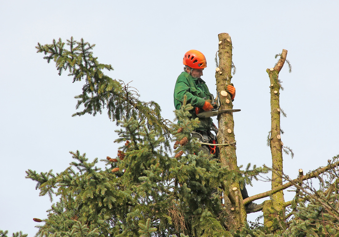 tree cutting madera ca