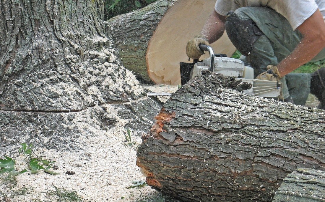stump grinding madera ca